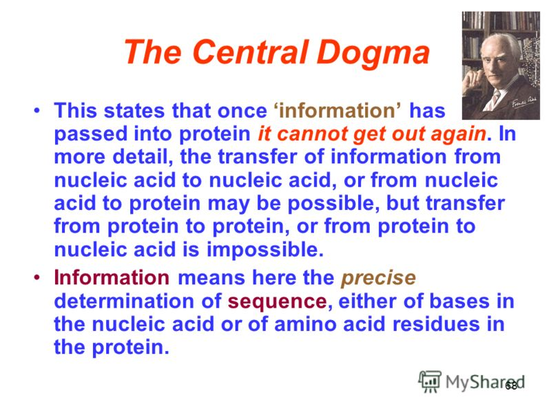 The Central Dogma This states that once information has passed into protein it cannot get out again. In more detail, the transfer of information from nucleic acid to nucleic acid, or from nucleic acid to protein may be possible, but transfer from pro