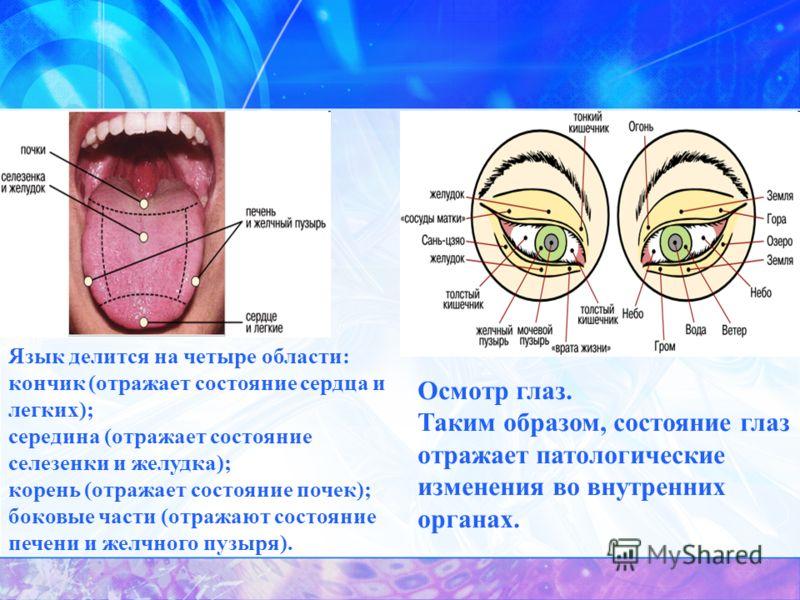 Осмотр глаз. Таким образом, состояние глаз отражает патологические изменения во внутренних органах. Язык делится на четыре области: кончик (отражает состояние сердца и легких); середина (отражает состояние селезенки и желудка); корень (отражает состо