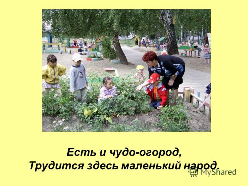Есть и чудо-огород, Трудится здесь маленький народ.