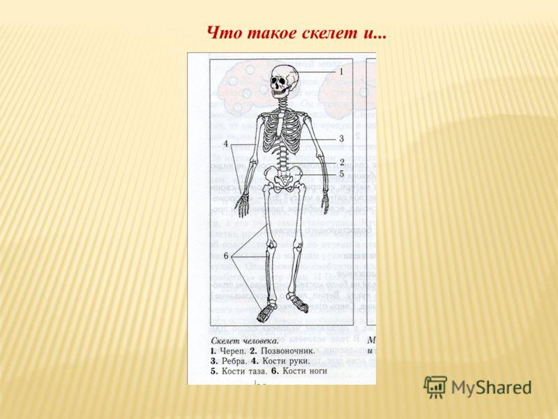 Что такое скелет и...