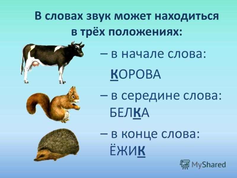 В словах звук может находиться в трёх положениях: – в начале слова: КОРОВА – в середине слова: БЕЛКА – в конце слова: ЁЖИК