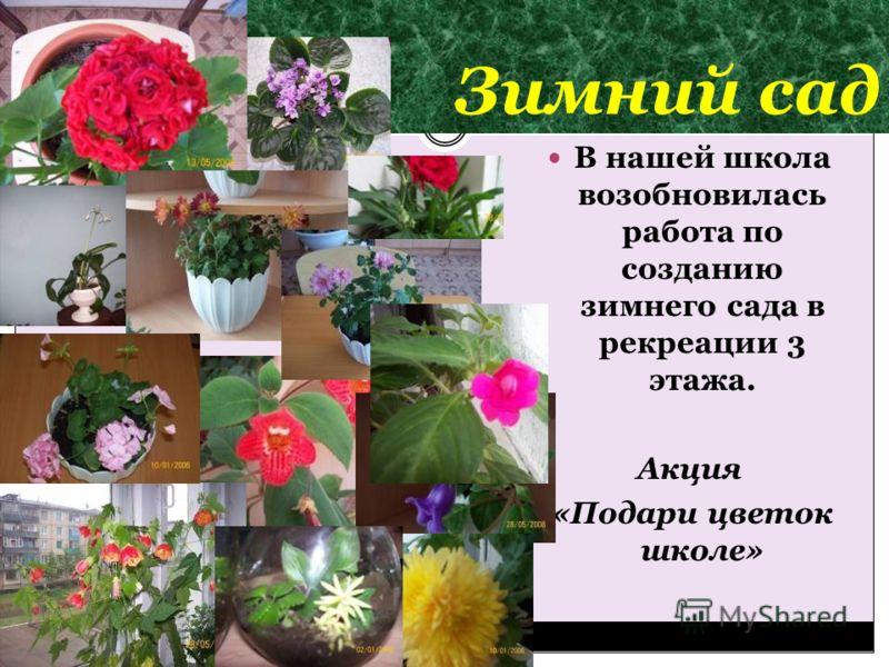 Зимний сад В нашей школа возобновилась работа по созданию зимнего сада в рекреации 3 этажа. Акция «Подари цветок школе»