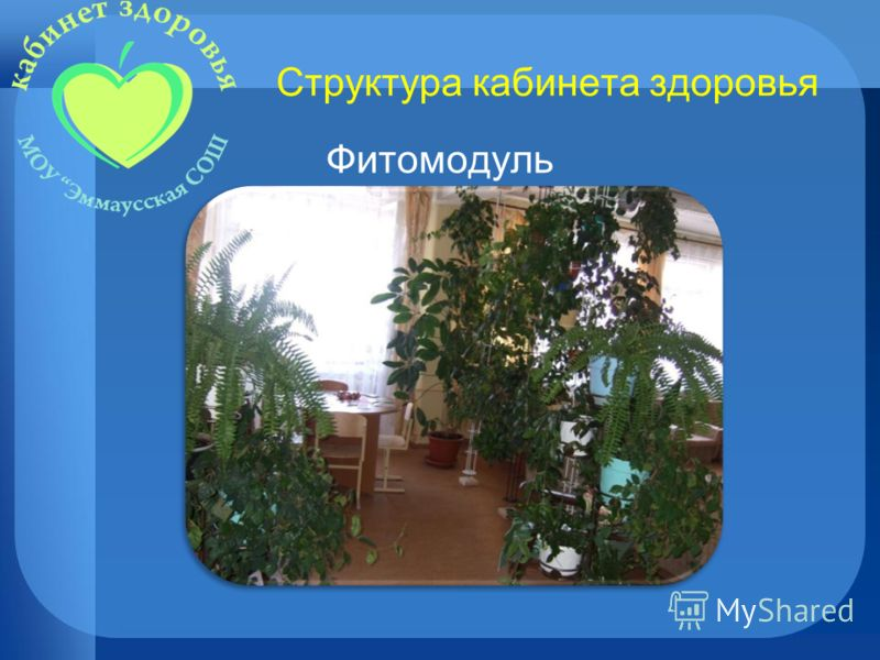 Структура кабинета здоровья Фитомодуль