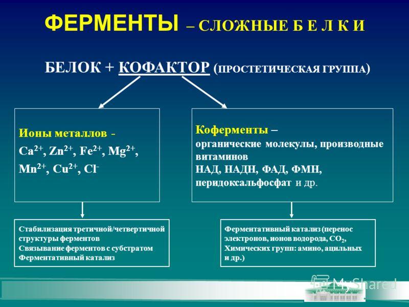 ФЕРМЕНТЫ – СЛОЖНЫЕ Б Е Л К И Ионы металлов - Ca 2+, Zn 2+, Fe 2+, Mg 2+, Mn 2+, Cu 2+, Cl - Коферменты – органические молекулы, производные витаминов НАД, НАДН, ФАД, ФМН, перидоксальфосфат и др. Стабилизация третичной/четвертичной структуры ферментов