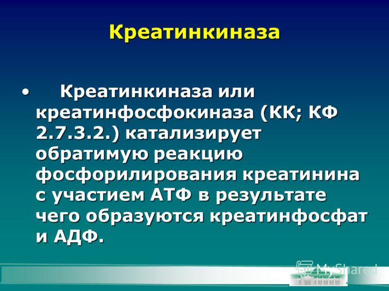 Креатинкиназа Креатинкиназа или креатинфосфокиназа (КК; КФ 2.7.3.2.) катализирует обратимую реакцию фосфорилирования креатинина с участием АТФ в результате чего образуются креатинфосфат и AДФ.Креатинкиназа или креатинфосфокиназа (КК; КФ 2.7.3.2.) кат