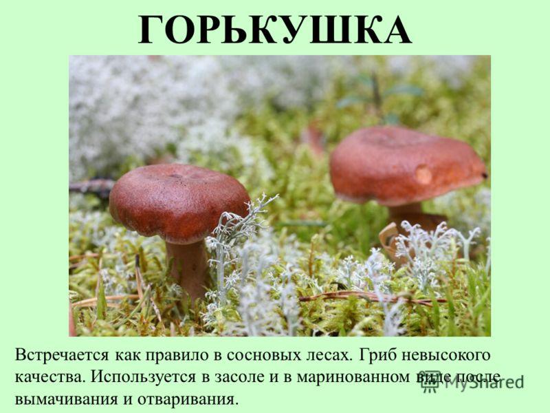 ГОРЬКУШКА Встречается как правило в сосновых лесах. Гриб невысокого качества. Используется в засоле и в маринованном виде после вымачивания и отваривания.