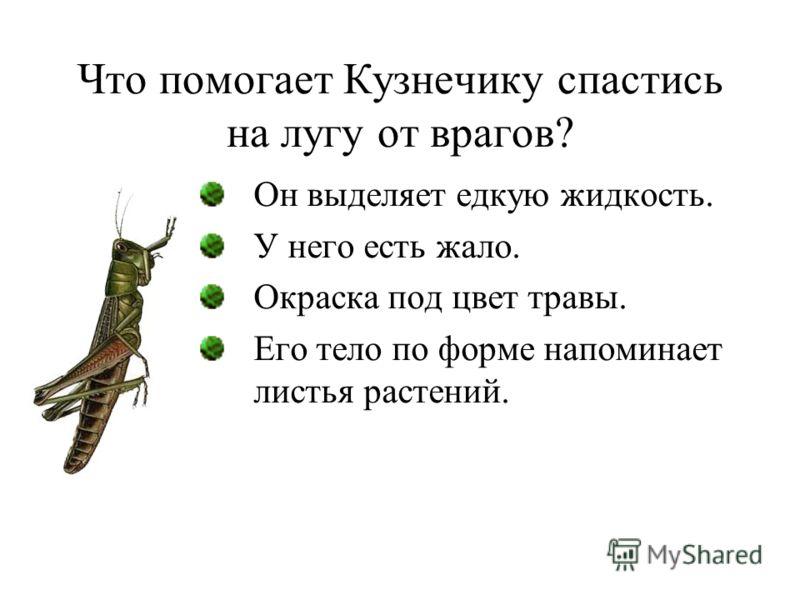 Что помогает Кузнечику спастись на лугу от врагов? Он выделяет едкую жидкость. У него есть жало. Окраска под цвет травы. Его тело по форме напоминает листья растений.
