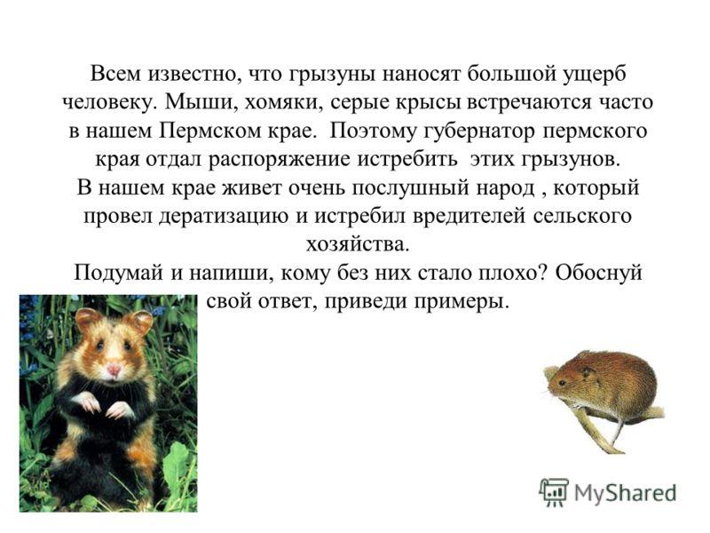Всем известно, что грызуны наносят большой ущерб человеку. Мыши, хомяки, серые крысы встречаются часто в нашем Пермском крае. Поэтому губернатор пермского края отдал распоряжение истребить этих грызунов. В нашем крае живет очень послушный народ, кото