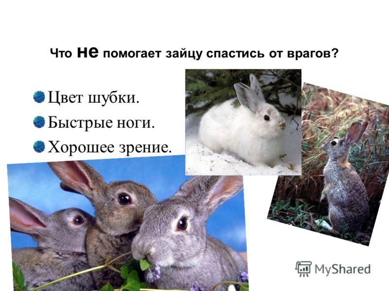 Что не помогает зайцу спастись от врагов? Цвет шубки. Быстрые ноги. Хорошее зрение.