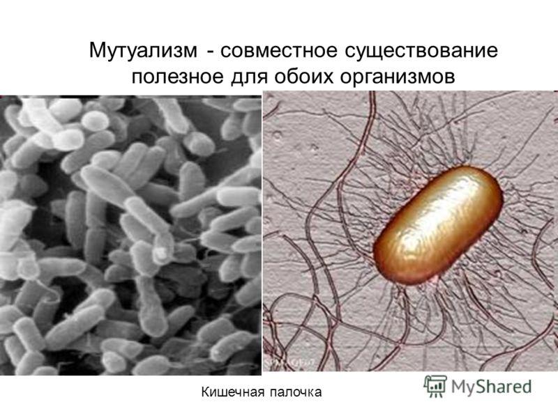 днк паразитов и днк человека