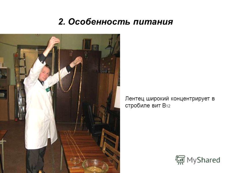 2. Особенность питания Лентец широкий концентрирует в стробиле вит В 12