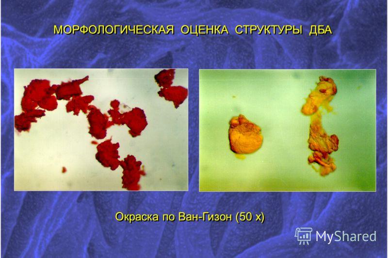 МОРФОЛОГИЧЕСКАЯ ОЦЕНКА СТРУКТУРЫ ДБА Окраска по Ван-Гизон (50 х)