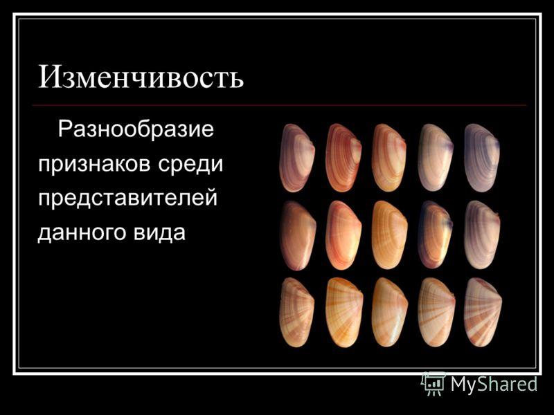 Изменчивость Разнообразие признаков среди представителей данного вида