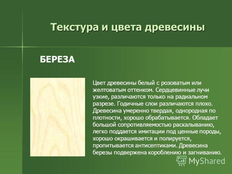Цвет древесины белый с розоватым или желтоватым оттенком. Сердцевинные лучи узкие, различаются только на радиальном разрезе. Годичные слои различаются плохо. Древесина умеренно твердая, однородная по плотности, хорошо обрабатывается. Обладает большой