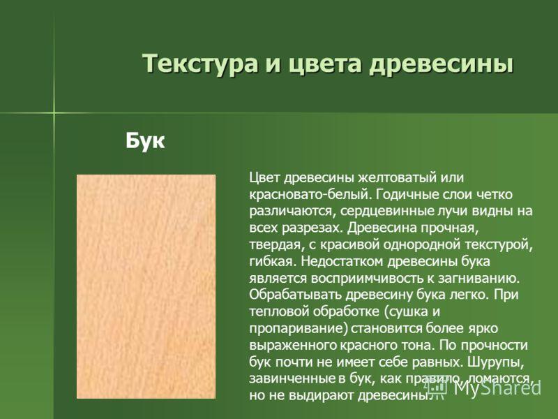 Текстура и цвета древесины Цвет древесины желтоватый или красновато-белый. Годичные слои четко различаются, сердцевинные лучи видны на всех разрезах. Древесина прочная, твердая, с красивой однородной текстурой, гибкая. Недостатком древесины бука явля