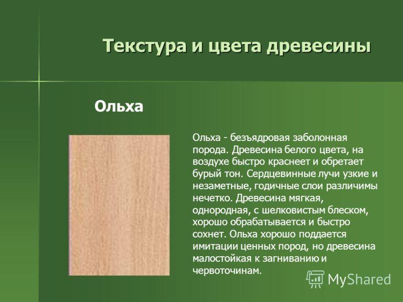 Текстура и цвета древесины Ольха - безъядровая заболонная порода. Древесина белого цвета, на воздухе быстро краснеет и обретает бурый тон. Сердцевинные лучи узкие и незаметные, годичные слои различимы нечетко. Древесина мягкая, однородная, с шелковис