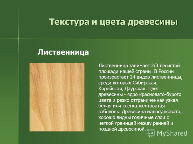 Текстура и цвета древесины Лиственница занимает 2/3 лесистой площади нашей страны. В России произрастает 14 видов лиственницы, среди которых Сибирская, Корейская, Даурская. Цвет древесины - ядро красновато-бурого цвета и резко отграниченная узкая бел