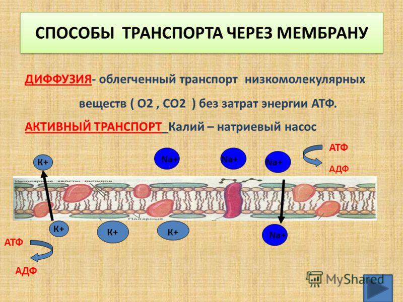 СПОСОБЫ ТРАНСПОРТА ЧЕРЕЗ МЕМБРАНУ ДИФФУЗИЯ- облегченный транспорт низкомолекулярных веществ ( О2, СО2 ) без затрат энергии АТФ. АКТИВНЫЙ ТРАНСПОРТ Калий – натриевый насос К+ Na+ АТФ АДФ АТФ