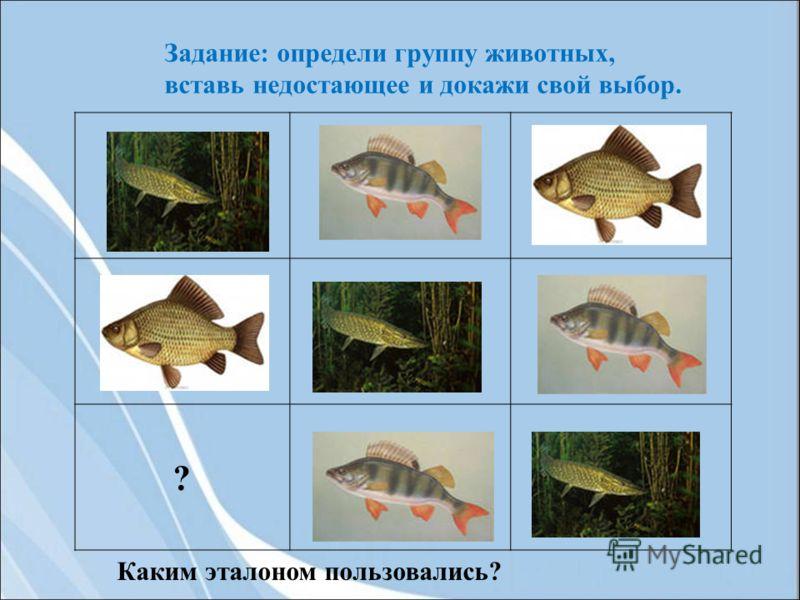 ? Задание: определи группу животных, вставь недостающее и докажи свой выбор. Каким эталоном пользовались?