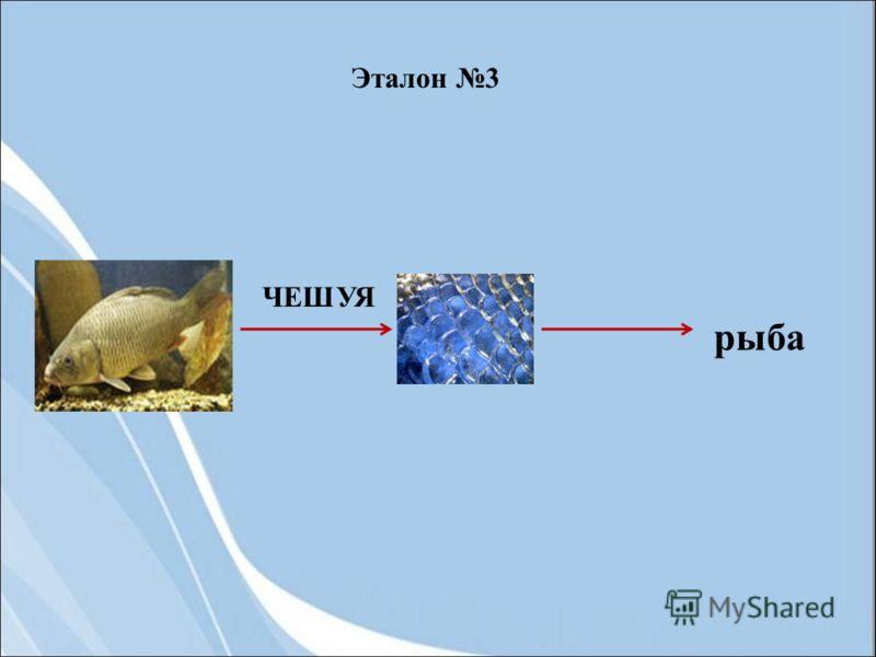 ЧЕШУЯ рыба Эталон 3