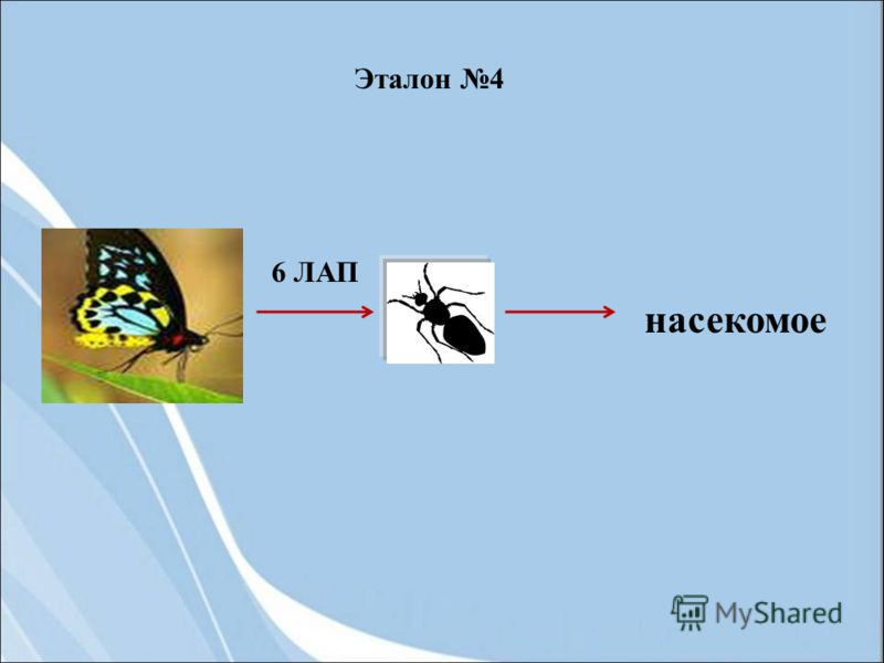 6 ЛАП насекомое Эталон 4