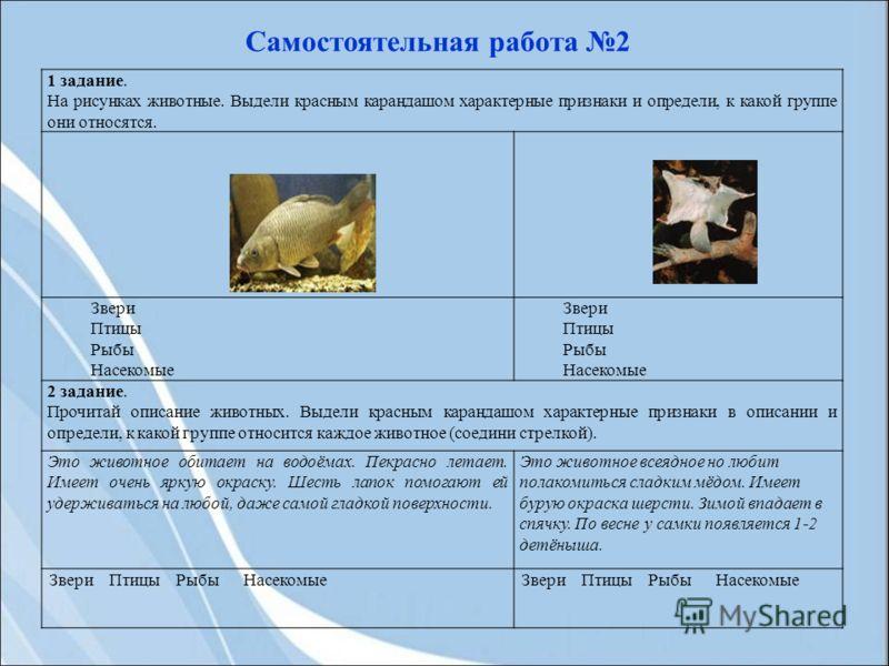 1 задание. На рисунках животные. Выдели красным карандашом характерные признаки и определи, к какой группе они относятся. Звери Птицы Рыбы Насекомые Звери Птицы Рыбы Насекомые 2 задание. Прочитай описание животных. Выдели красным карандашом характерн
