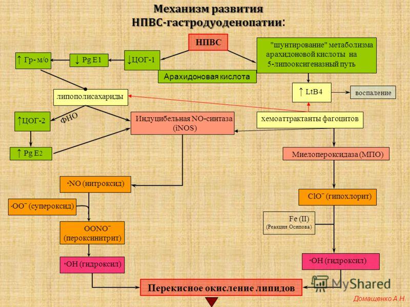 Механизм развития НПВС-гастродуоденопатии Механизм развития НПВС-гастродуоденопатии : НПВС Гр- м/о · ООˉ (супероксид) ·NO (нитроксид) OONOˉ (пероксинитрит) ·ОН (гидроксил) липополисахариды Pg E 2 ЦОГ-2