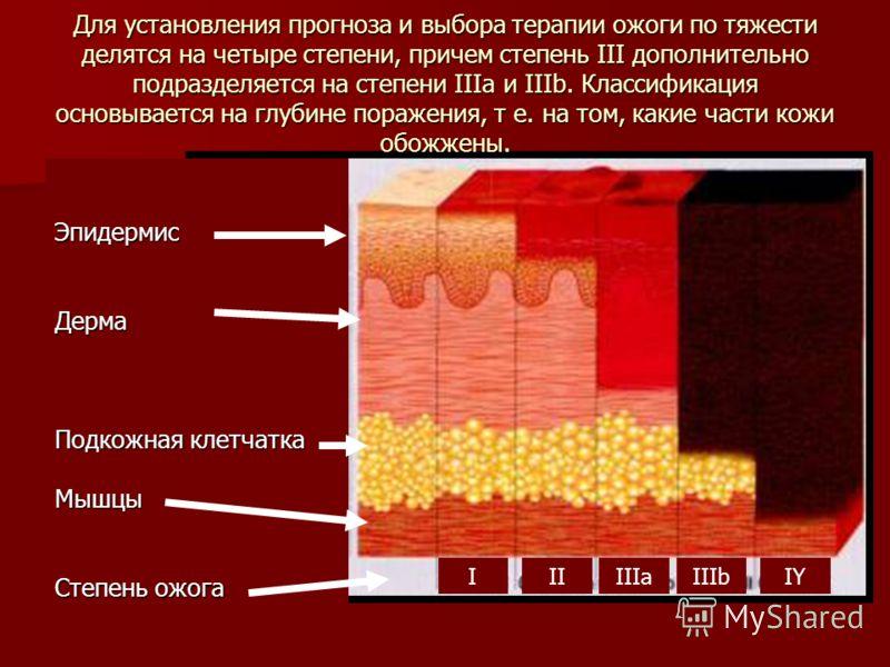 Для установления прогноза и выбора терапии ожоги по тяжести делятся на четыре степени, причем степень III дополнительно подразделяется на степени IIIa и IIIb. Классификация основывается на глубине поражения, т е. на том, какие части кожи обожжены. Эп