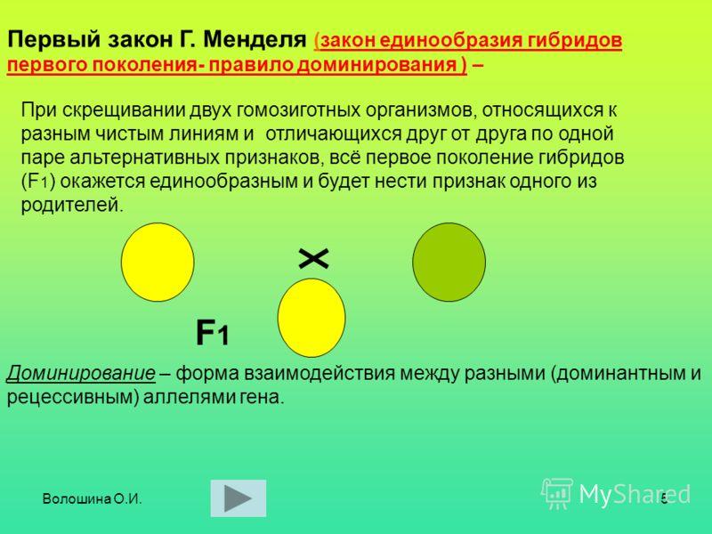 Волошина О.И.5 При скрещивании двух гомозиготных организмов, относящихся к разным чистым линиям и отличающихся друг от друга по одной паре альтернативных признаков, всё первое поколение гибридов (F 1 ) окажется единообразным и будет нести признак одн