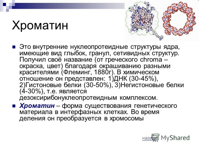 Хроматин Это внутренние нуклеопротеидные структуры ядра, имеющие вид глыбок, гранул, сетивидных структур. Получил своё название (от греческого chroma – окраска, цвет) благодаря окрашиванию разными красителями (Флеминг, 1880г). В химическом отношение