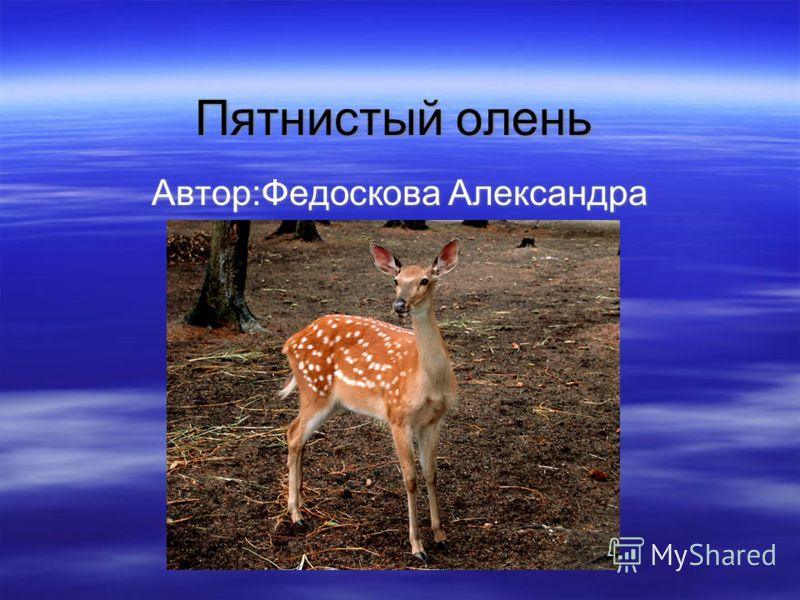 Пятнистый олень Автор:Федоскова Александра