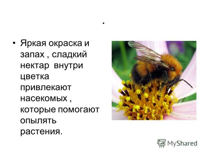 . Яркая окраска и запах, сладкий нектар внутри цветка привлекают насекомых, которые помогают опылять растения.