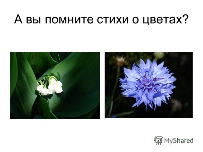 А вы помните стихи о цветах?