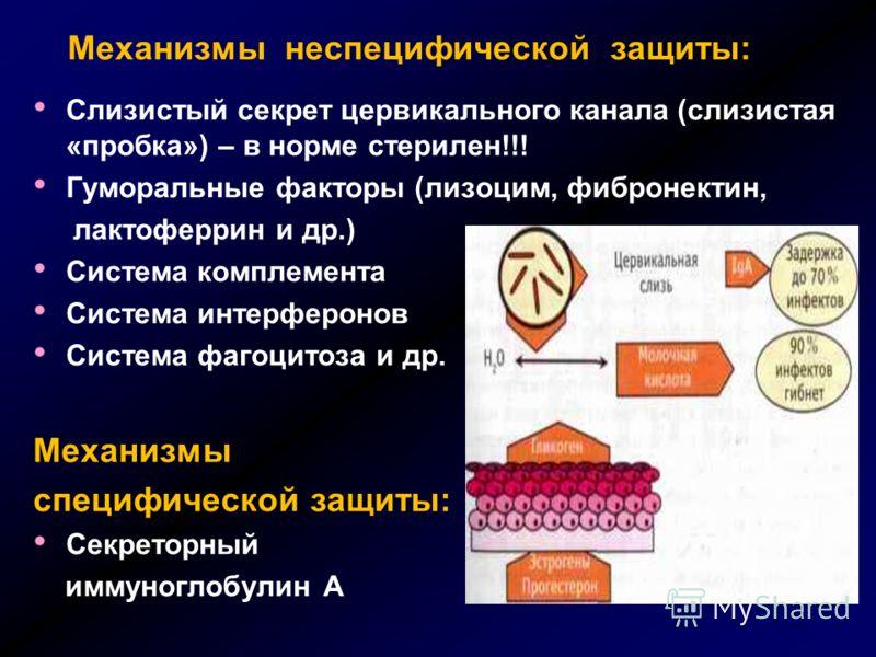 Механизмы неспецифической защиты: Слизистый секрет цервикального канала (слизистая «пробка») – в норме стерилен!!! Гуморальные факторы (лизоцим, фибронектин, лактоферрин и др.) Система комплемента Система интерферонов Система фагоцитоза и др. Механиз