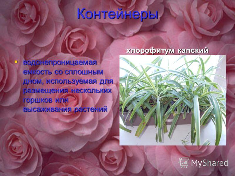 Контейнеры водонепроницаемая емкость со сплошным дном, используемая для размещения нескольких горшков или высаживания растений хлорофитум капский