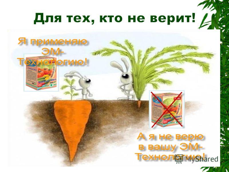 Для увеличения урожайности весной необходимо обязательно совершить первичный полив грунта препаратом «Тамир» – он позволит быстрее земле прогреться и будет ферментировать органику, оставшуюся с осени. «Тамир нам пригодится и для приготовления компост