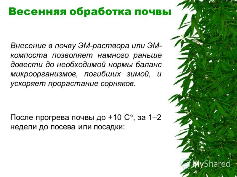 Полив рассады и молодых всходов - Не обрабатывайте ЭМ-раствором только что пересаженные растения, дайте им 2–3 недели для укоренения. - Полив и опрыскивание ЭМ-раствором в открытом грунте лучше проводить рано утром по росе, в вечернее время или в пас