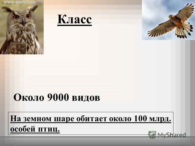 Обитает около 100 млрд особей птиц