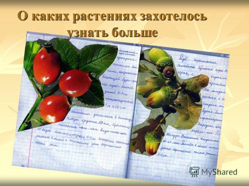 О каких растениях захотелось узнать больше