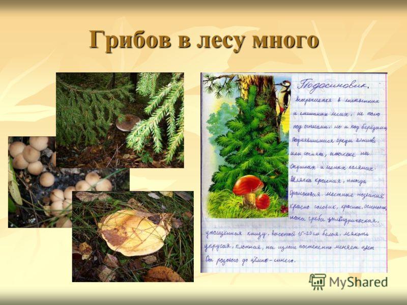Грибов в лесу много