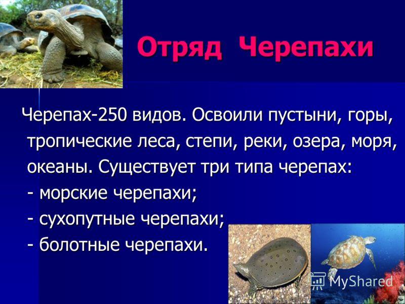 Отряд Черепахи Отряд Черепахи Черепах-250 видов. Освоили пустыни, горы, тропические леса, степи, реки, озера, моря, тропические леса, степи, реки, озера, моря, океаны. Существует три типа черепах: океаны. Существует три типа черепах: - морские черепа