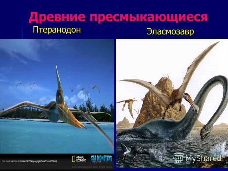 Древние пресмыкающиеся Птеранодон Птеранодон Эласмозавр Эласмозавр