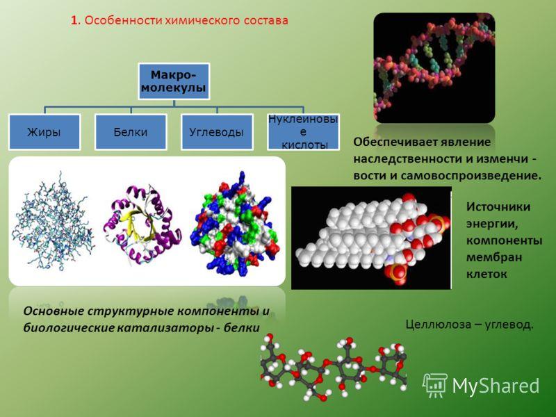 Макро- молекулы ЖирыБелкиУглеводы Нуклеиновы е кислоты 1. Особенности химического состава Обеспечивает явление наследственности и изменчи - вости и самовоспроизведение. Основные структурные компоненты и биологические катализаторы - белки Источники эн