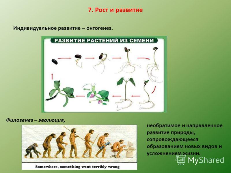 7. Рост и развитие Индивидуальное развитие – онтогенез. Филогенез – эволюция, необратимое и направленное развитие природы, сопровождающееся образованием новых видов и усложнением жизни.
