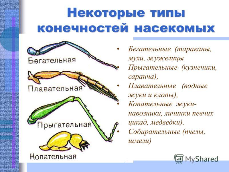 Некоторые типы ротовых аппаратов насекомых Грызущий (тараканы, жуки) Колюще-сосущий (клопы, тли, комары) Сосущий (бабочки) Лакающий (шмели, пчелы) Лижущий (мухи)