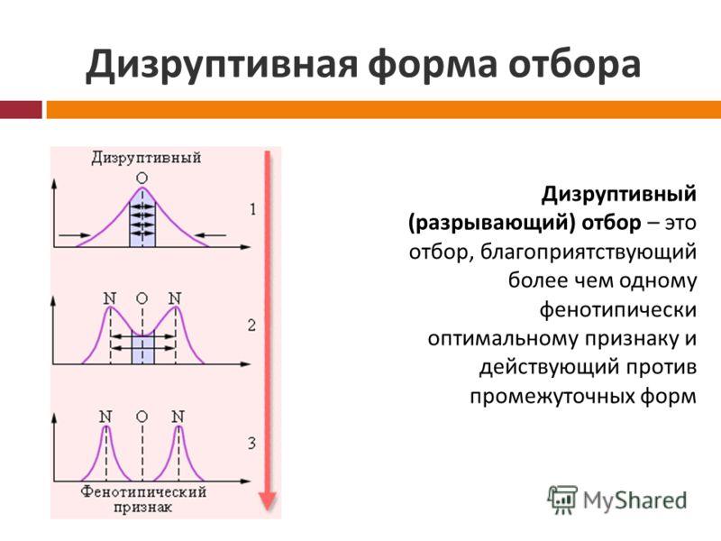 Дизруптивная форма отбора Дизруптивный (разрывающий) отбор – это отбор, благоприятствующий более чем одному фенотипически оптимальному признаку и действующий против промежуточных форм