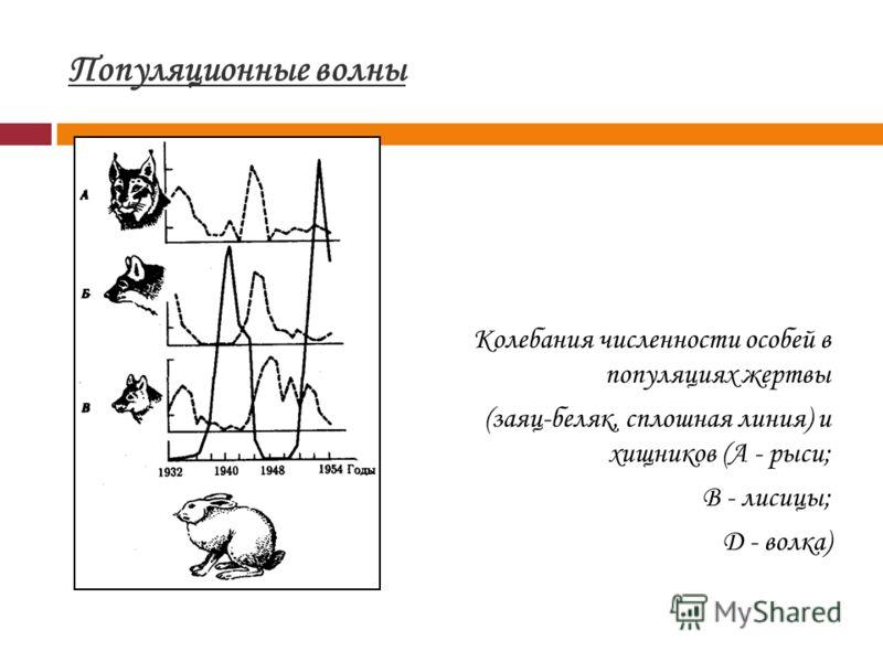Популяционные волны Колебания численности особей в популяциях жертвы (заяц-беляк, сплошная линия) и хищников (А - рыси; B - лисицы; Д - волка)