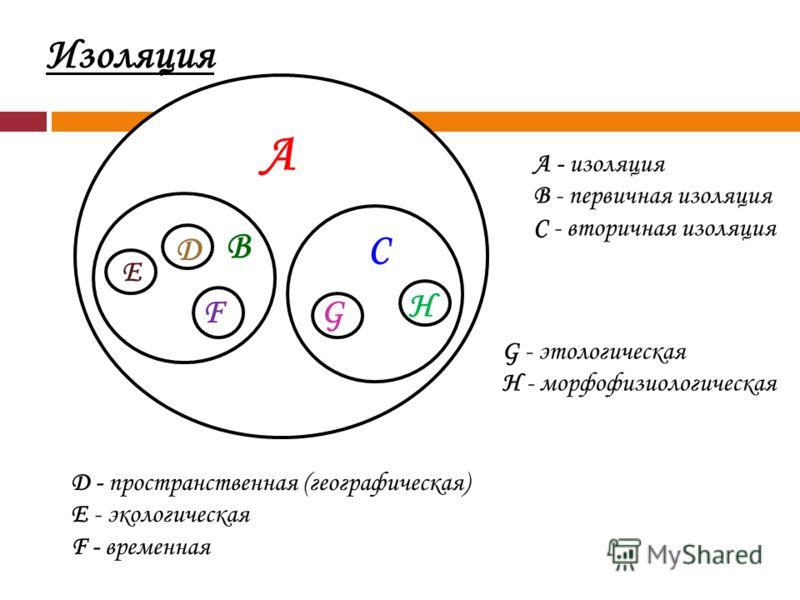А В С Д Е FG H А - изоляция В - первичная изоляция С - вторичная изоляция D - пространственная (географическая) E - экологическая F - временная G - этологическая H - морфофизиологическая Изоляция