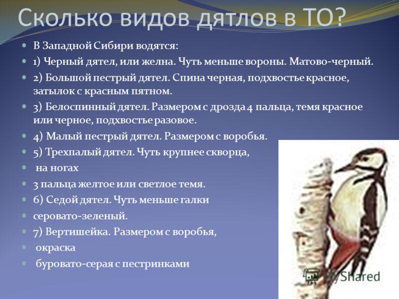 Сколько видов дятлов в ТО? В Западной Сибири водятся: 1) Черный дятел, или желна. Чуть меньше вороны. Матово-черный. 2) Большой пестрый дятел. Спина черная, подхвостье красное, затылок с красным пятном. 3) Белоспинный дятел. Размером с дрозда 4 пальц