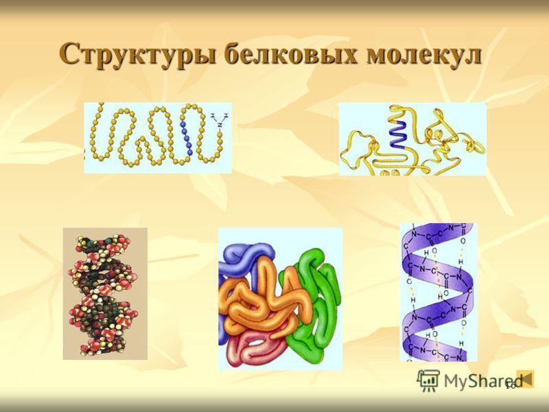 16 Структуры белковых молекул Структуры белковых молекул